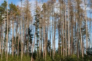 trees-3939562_1920