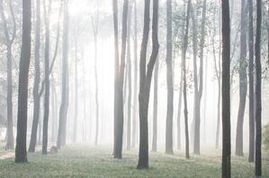 woods-3881642_1920
